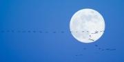 Through the Moon