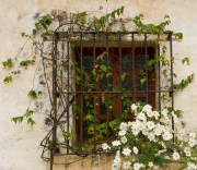 Window in Bloom