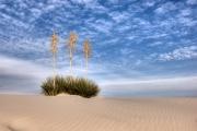 Yucca, Yucca, Yucca