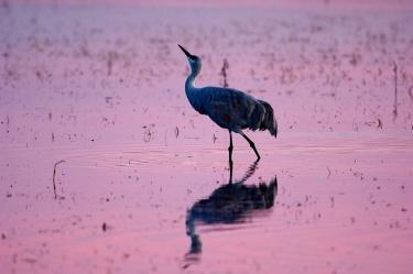 Pink Sunset #3