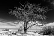 Tree & Sky - Canyon de Chelly