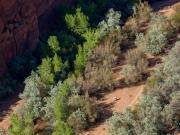 White Horse - Canyon de Chelly