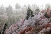 Icy Morning at Newfound Gap