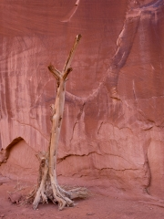 Dead Wood - Monument Valley