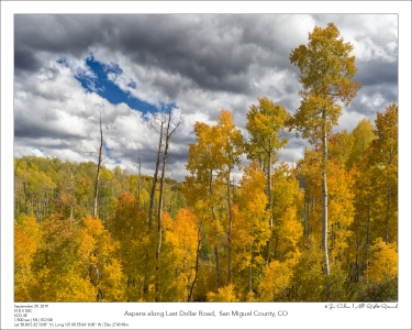 Aspens along Last Dollar Road,  San Miguel County, CO