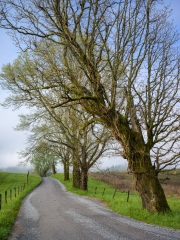 Hyatt Lane - Cades Cove